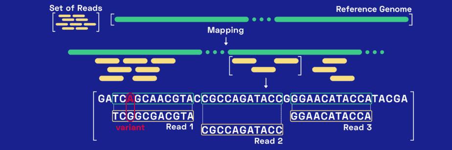 How to Start Exploring your Raw Genomic Data – Nebula
