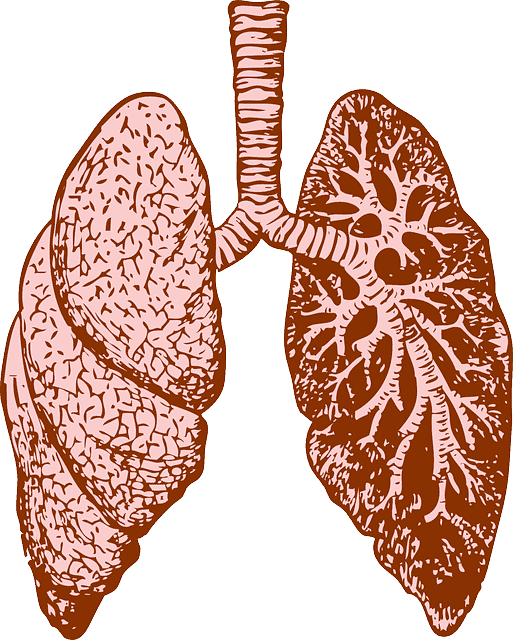Lungs graphic emphysema