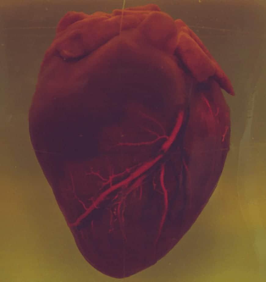 фотография человеческого сердца