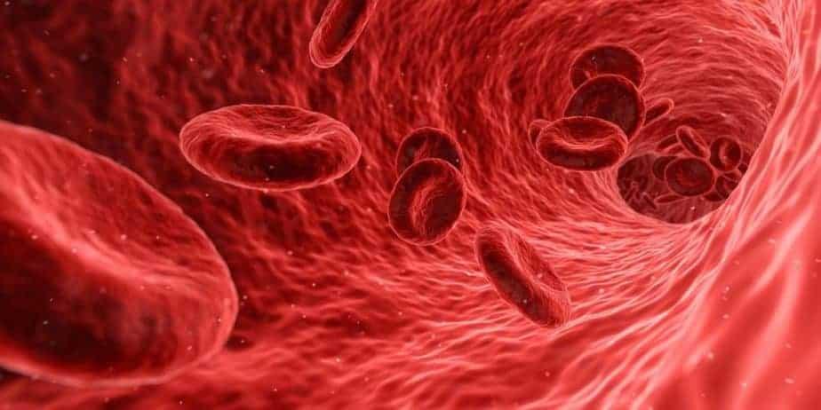 الوريد الشرياني الدم