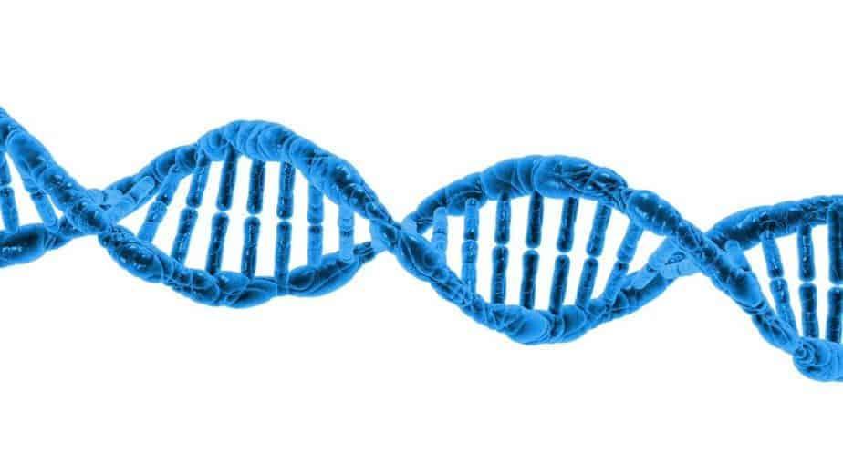 Perte de la structure de l'hélice d'ADN du chromosome y