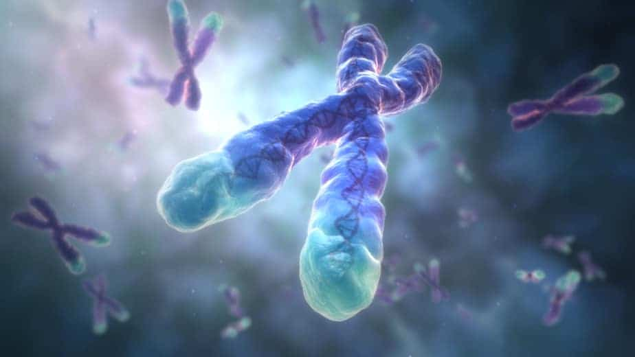 image of chromosome and telomeres
