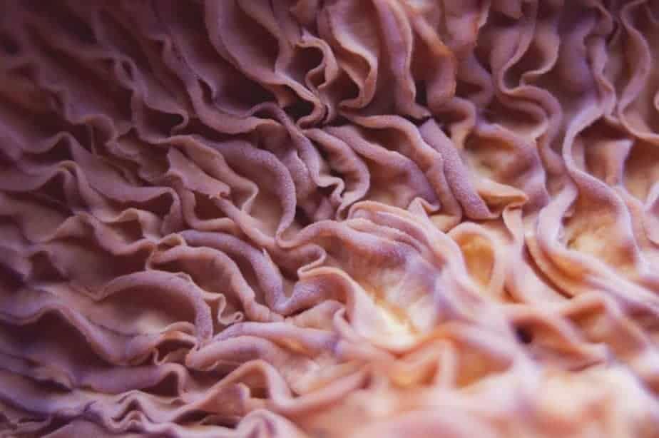 As muitas dobras do córtex cerebral aumentam sua área de superfície.