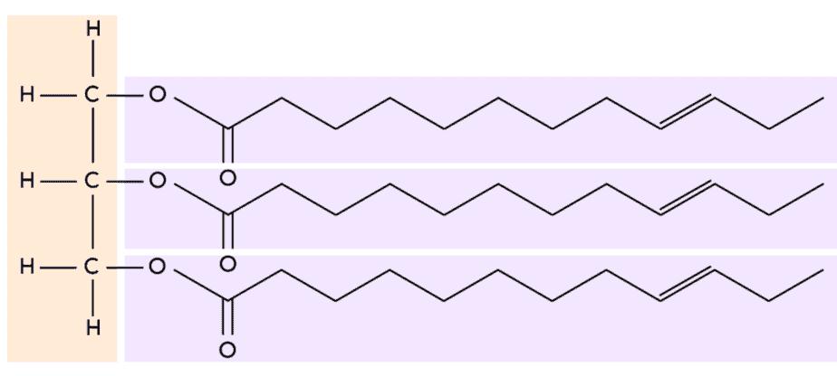 La imagen del 'tri' en los triglicéridos se refiere a las tres cadenas de ácidos grasos.