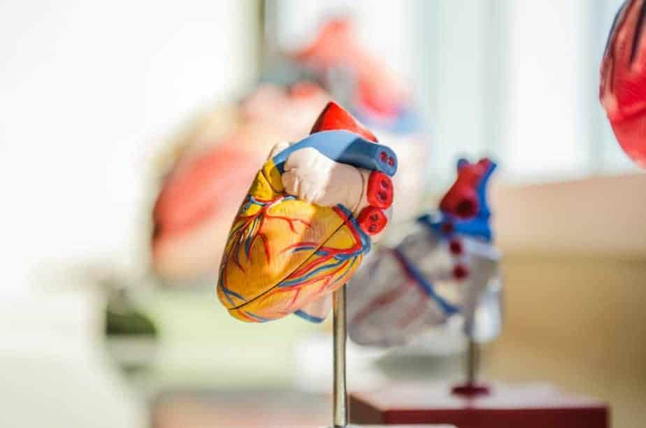 modelo de corazon