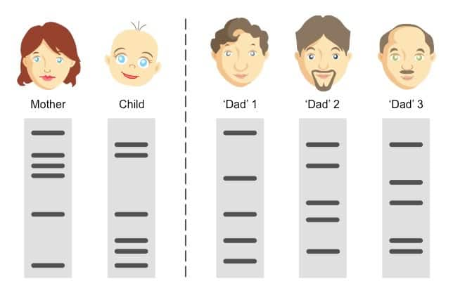 Prueba de paternidad