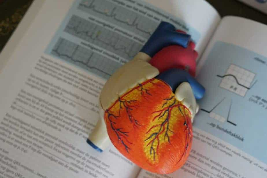 model of heart on medical textbook