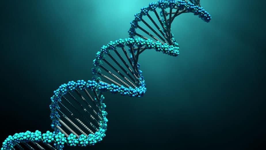 DNA (ácido desoxirribonucléico) - O projeto universal da vida