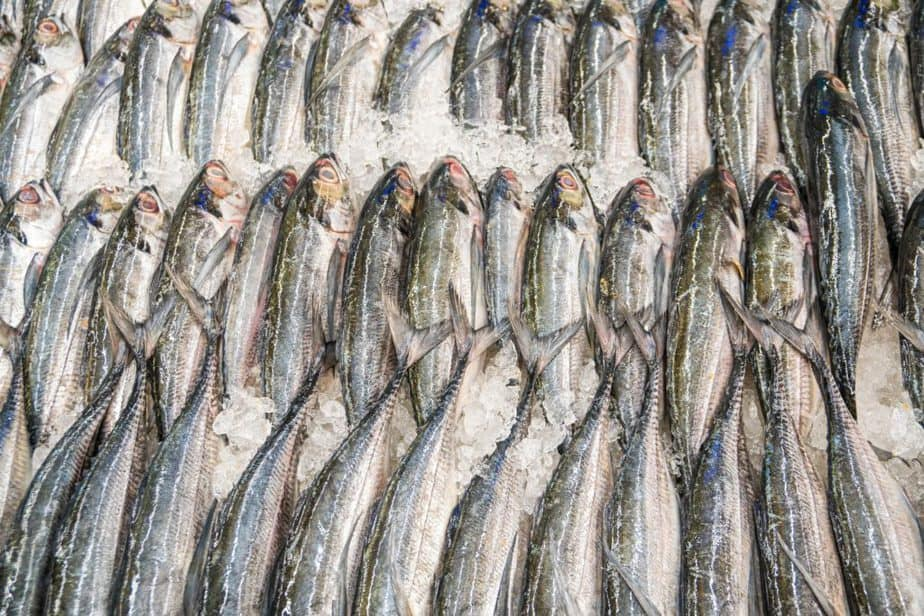 poisson sur glace