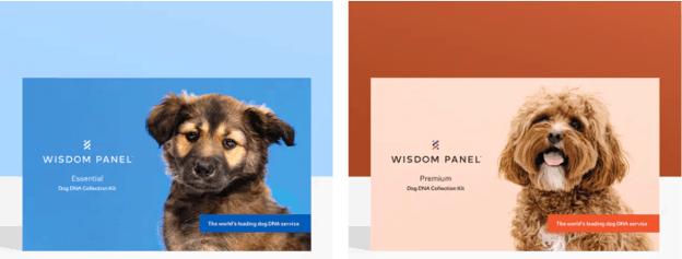 Die beiden Optionen für Wisdom Panel-Hunde-DNA-Tests