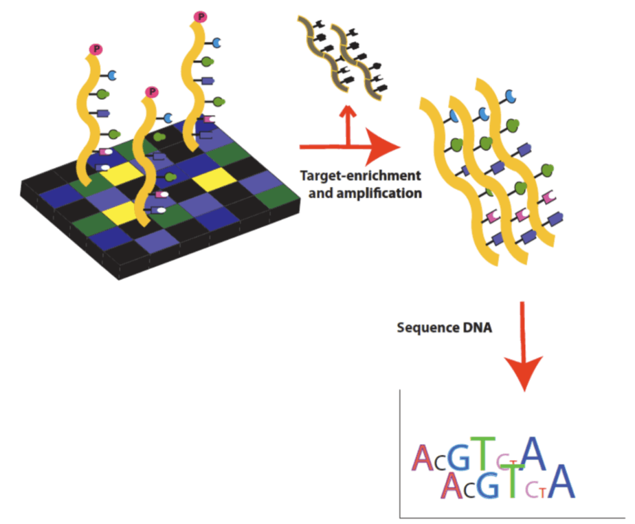 Whole exome DNA sequencing