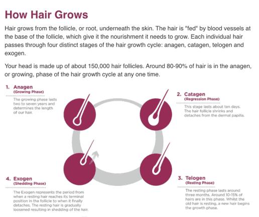 4 steps in hair growth