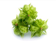 Tribulus Terrestris: un ingrediente en Test Boost Max