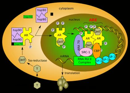 Mechanismus von Rad 140