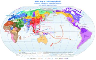 Haplogrupos Y DNA