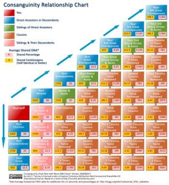 A centomorgan chart helps us understand DNA matching