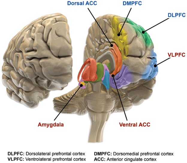 Various sections of the brain affected by bipolar disorder