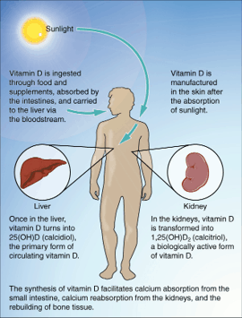 Formation of vitamin D