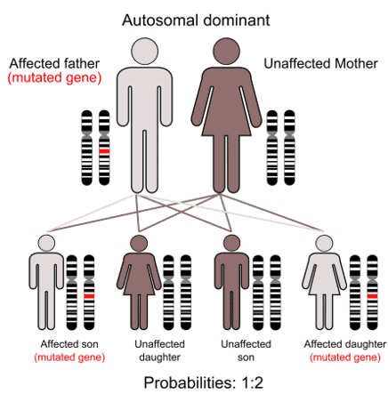 Tourettes is associated with an autosomal dominant gene