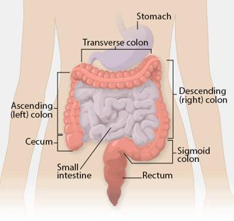 The colon in the GI tract is where colon cancer originates